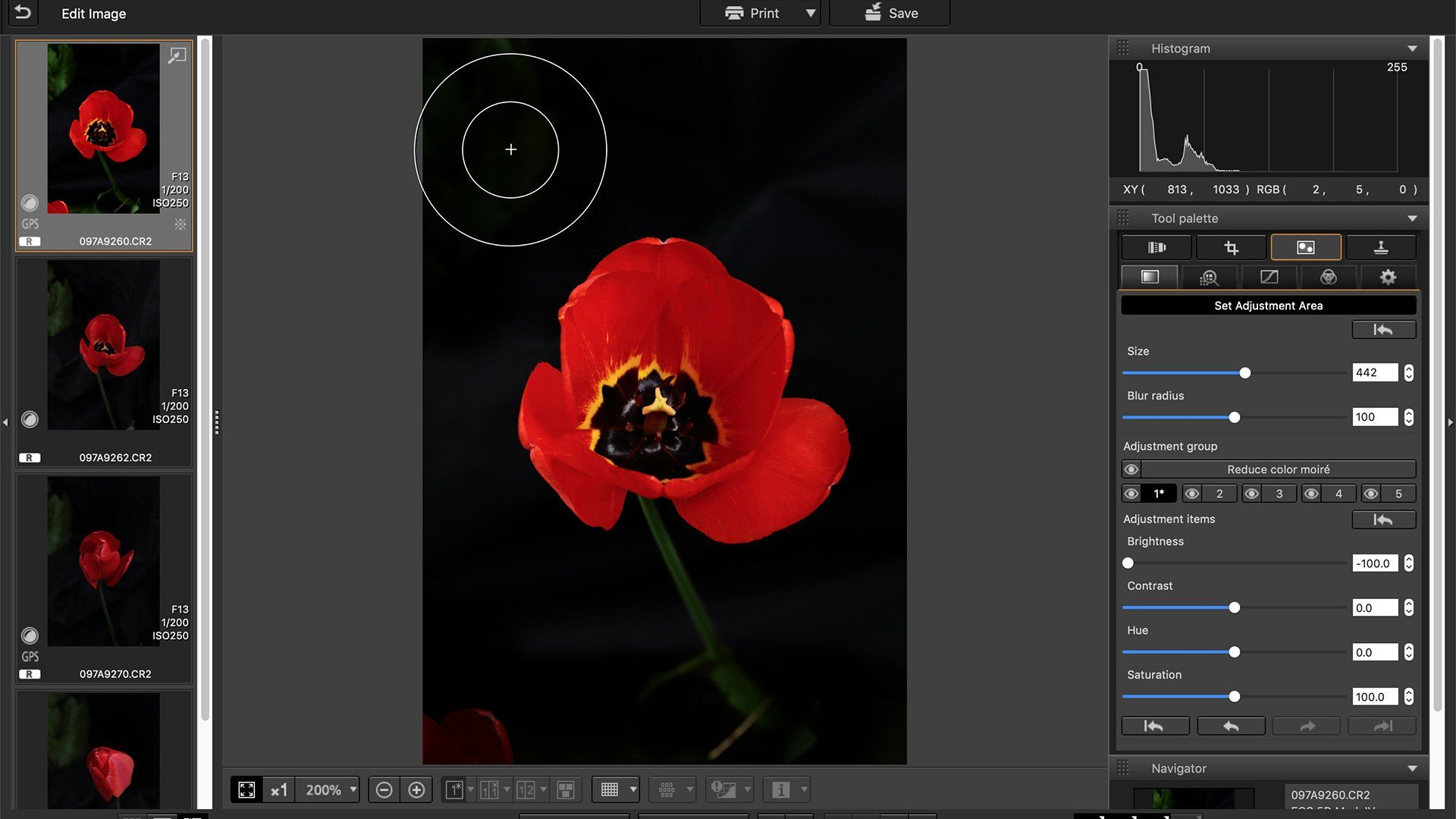 An image of a tulip is tweaked in Canon's Digital Photo Professional imaging software.